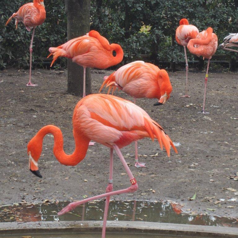 DonCharisma.com, Don Charisma, Liz Herron Flamingos Tokyo Zoo 2013