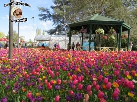 DonCharisma.com,Flowers 4 & Gazebo Canberra Floriade 2013