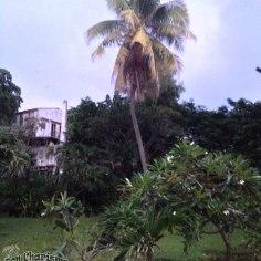 DonCharisma.org Beach Walk 3 Palm Tree HDR