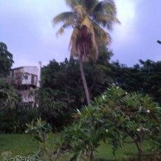 DonCharisma.org Beach Walk 3 Palm Tree non-HDR