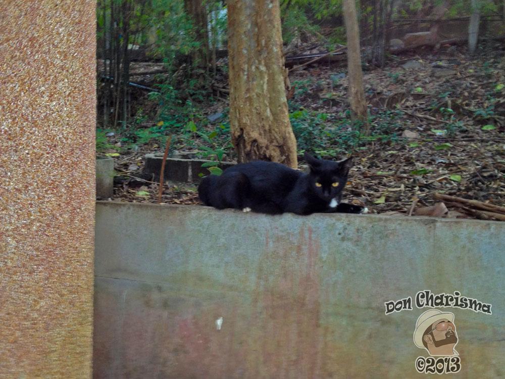 DonCharisma.org Black Pussy Cat 2 - Big Buddha Hill