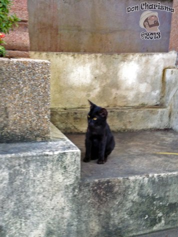 DonCharisma.org Black Pussy Cat Big Buddha Hill