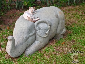 DonCharisma.org Cat On A Baby Elephant