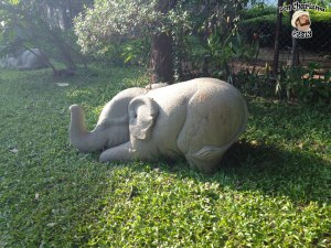DonCharisma.org Little Elephant One