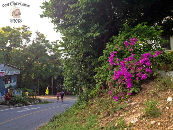 DonCharisma.org Road Side Flowers - Big Buddha Hill
