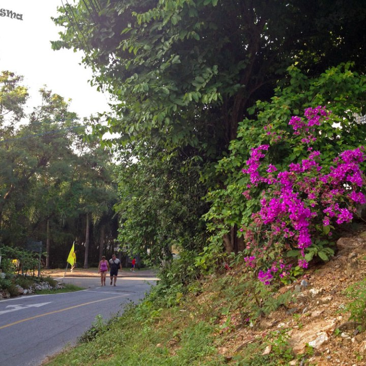 DonCharisma.org Road Side Flowers - Big Buddha Hill
