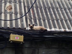 DonCharisma.org Thai Pussy Cat On Power Cables 2