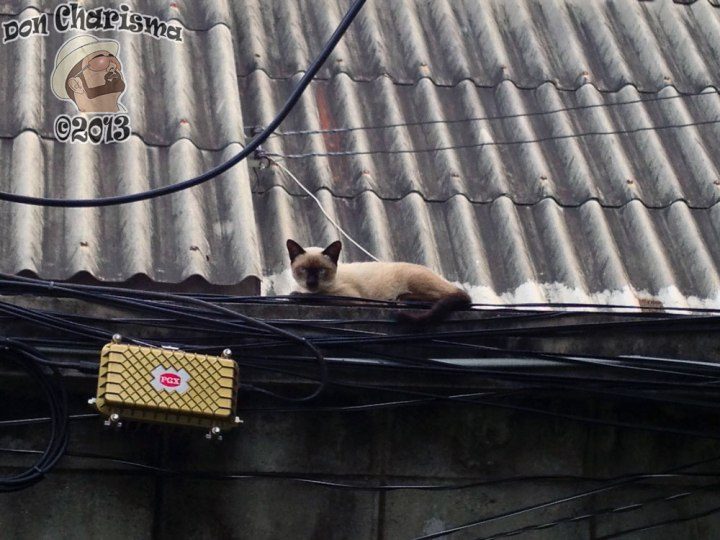 DonCharisma.org Thai Cat On Power Cables 2