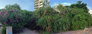 DonCharisma.org Beautiful Flowering Wall Of Greenery