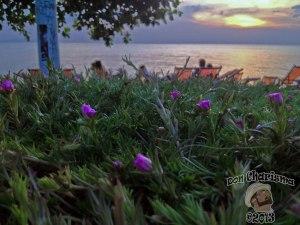 DonCharisma.org Sea Flower Sunset Macro 1L