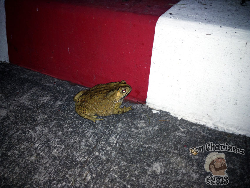 toad on the road don charisma