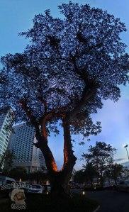 DonCharisma.org Tree Of Awesomeness 3 PTGui