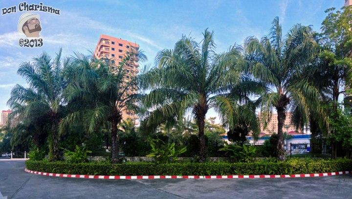 DonCharisma.org Palm Trees PTGui-5w-x-1h-P