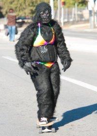 resized_200x280_bikini_gorilla