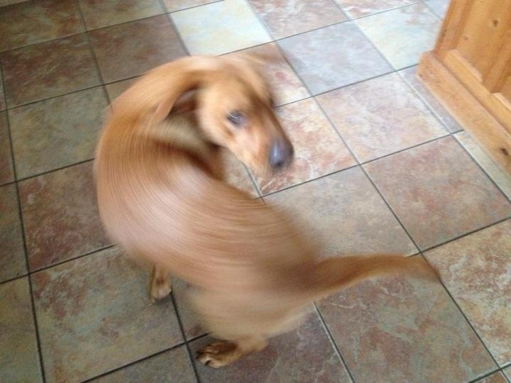 Spinning-Dog