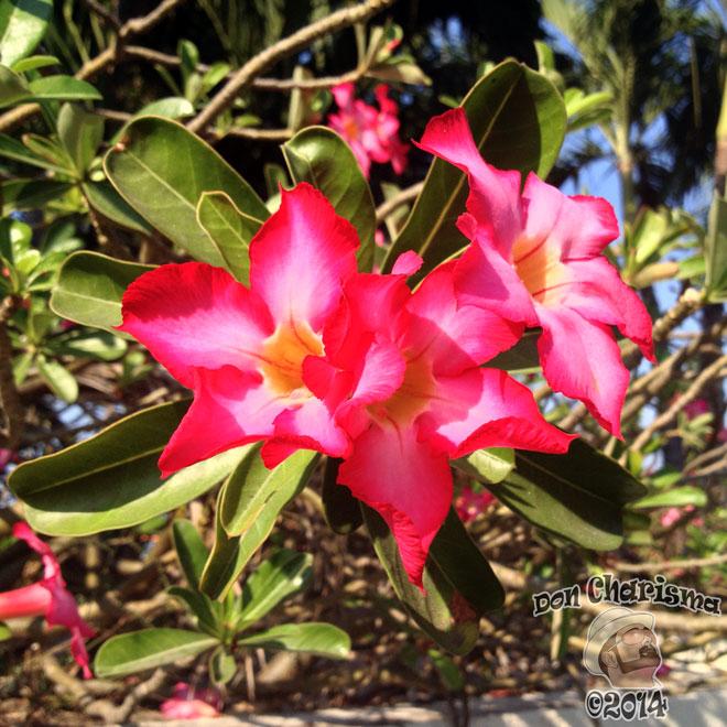 DonCharisma.org-Flowers-1L-FI
