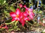 DonCharisma.org-Flowers-1L