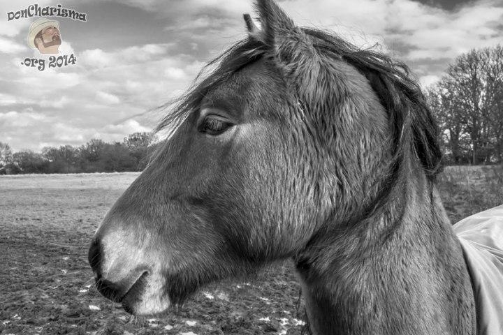 DonCharisma.org-Horse