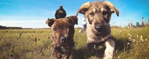 doncharisma.org-little-puppies-friends-PJ-GOPR0024-1920x768