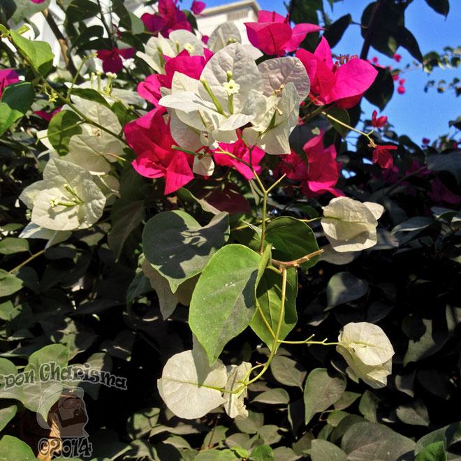 DonCharisma.org-More-Pretty-Flowers-1L-FI