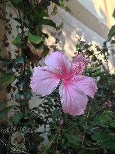 DonCharisma.org-Pretty-Flowers-2-Yay