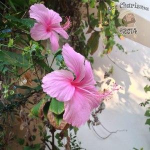DonCharisma.org-Pretty-Flowers-Yay