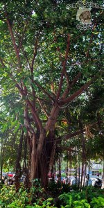 DonCharisma.org-Tree-Towerama