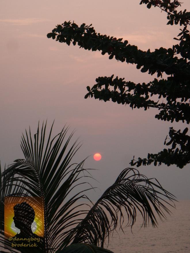 dannyboybroderick-leafy-sunset