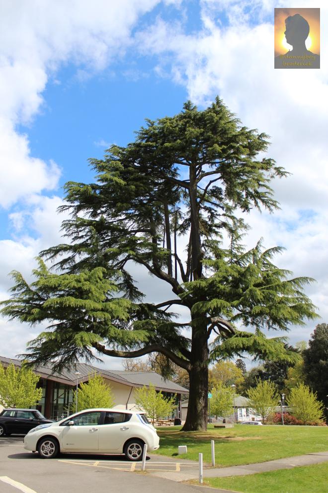dannyboybroderick-royal-holloway-tree