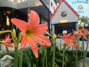 DonCharisma.org-Beautiful-Flowers-1L