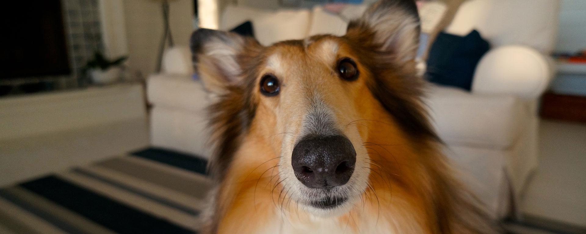 doncharisma.org-dog-pet-cute-doggy-little-happy-pb-705820-1920x768