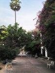 DonCharisma.org-Leafy-Road-1P