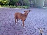 DonCharisma.org-Mama-Dog-1L