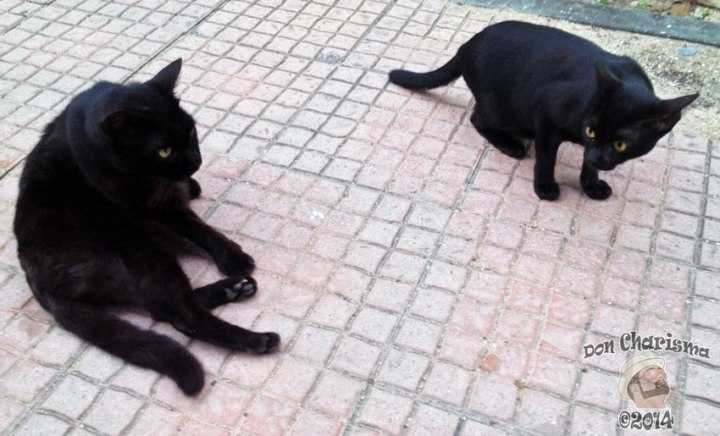 DonCharisma.org-Two-Black-Cats