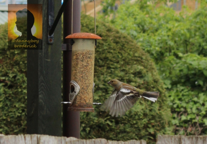 dannyboybroderick-bird-caught-in-flight