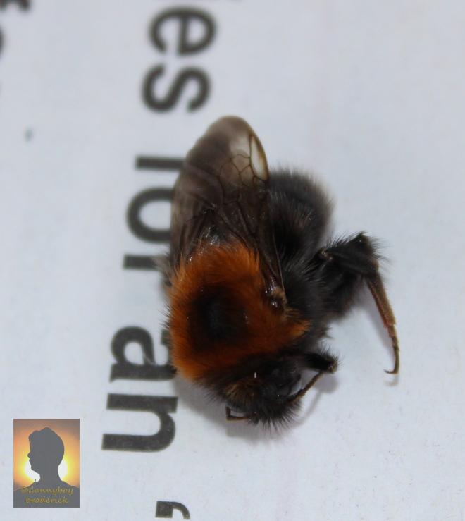 dannyboybroderick-death-of-a-bee-2