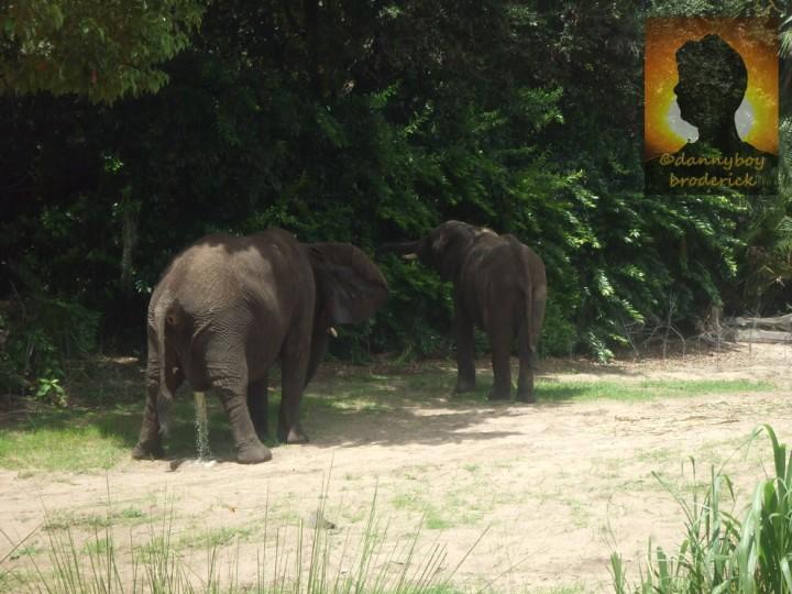 dannyboybroderick-elephants
