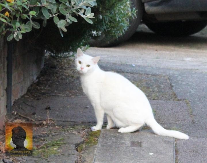 dannyboybroderick-pussy-cat-1