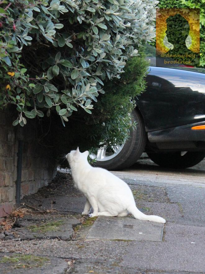dannyboybroderick-pussy-cat-2