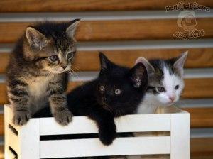 DonCharisma.org-Kittens-II