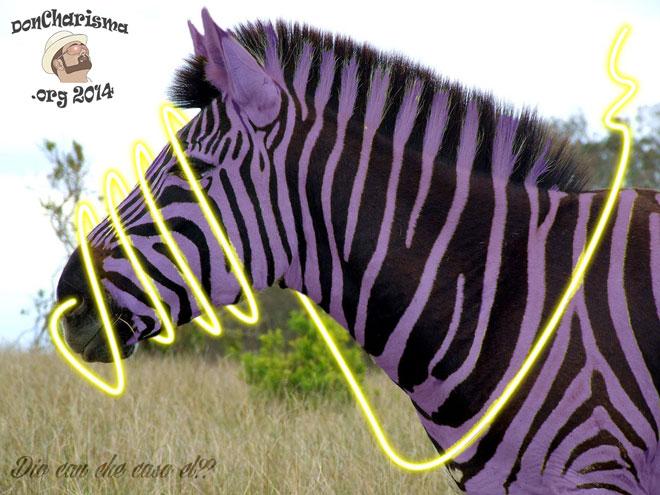 DonCharisma.org-Purple-Zebra