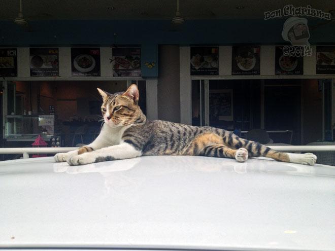 DonCharisma.org-Sunbathing-Cat