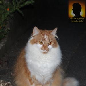 dannyboybroderick-cat-hairy-ears-cropped