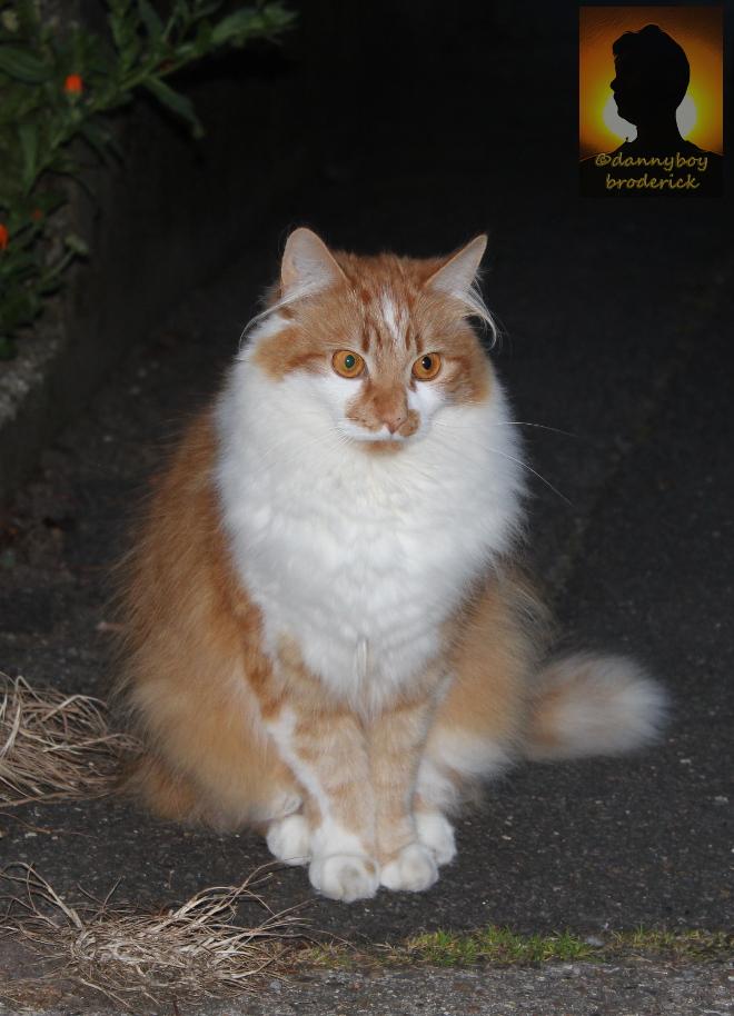 dannyboybroderick-cat-hairy-ears