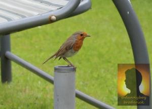 dannyboybroderick-robin