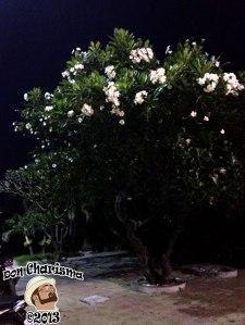DonCharisma.org-Night-Tree-White-Flowers