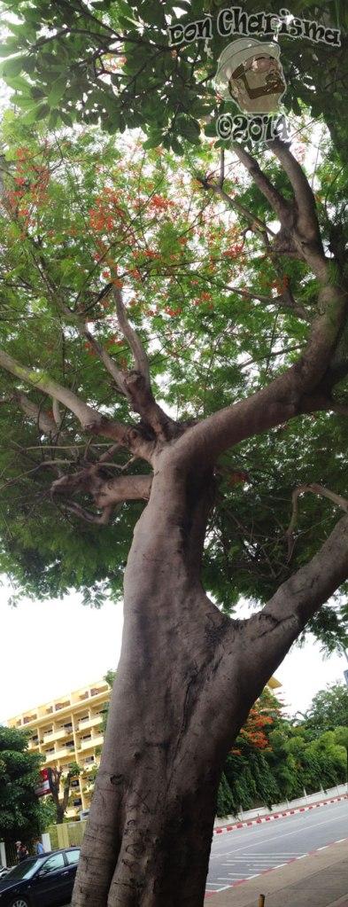 DonCharisma.org-Tree-Canopy-Towerama