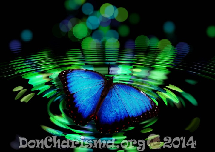 butterfly-pixabay-492536-DonCharisma.org-1024LE
