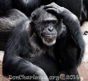 chimpanzee-animal-pixabay-17474-DonCharisma.org-1024LE