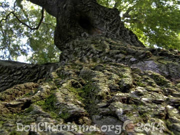 trees-84445-DonCharisma.org-1024LE